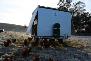 Launceston farm; Tamar Valley; eggs; pasture