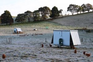 Launceston; free range; pasture; happy hens; tamar valley