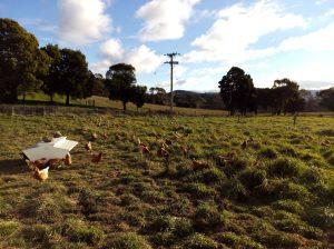 free range happy hens launceston